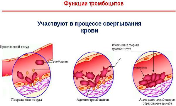 задача тромбоцитов в организме
