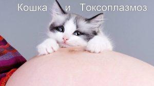 способы проверить кошку на токсоплазмоз
