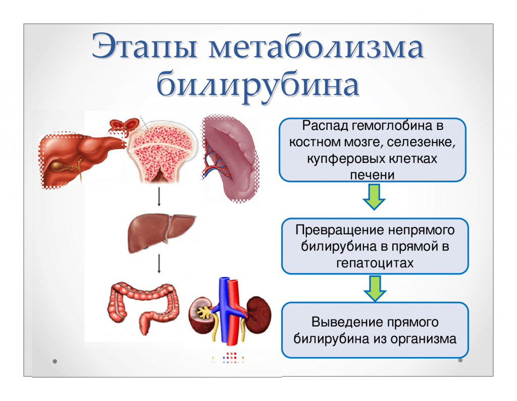 метаболизм билирубина