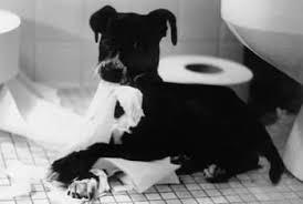 взятие анализа у собак