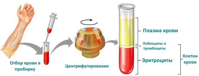 как определяют гематокрит