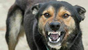 собака с бшенством