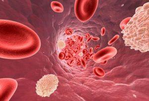 плазма крови