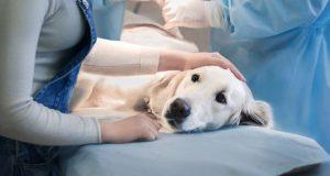 лечение собаки у ветеринара