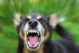 бешенство собаки