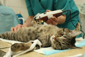 процедура взятия анализа крови