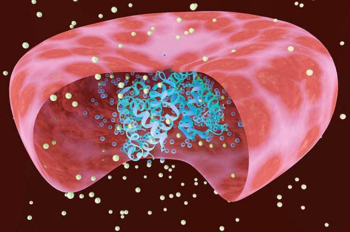 HGB в анализе крови