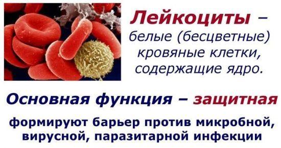 значение лейцкоцитов в крови