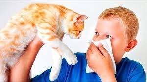 аллергия на кошку у мальчика
