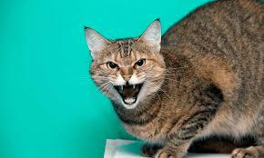 симптом бешенства у кошки