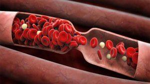 течение крови по сосудам