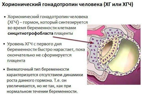 ХГЧ и его значение в организме