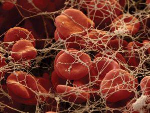 белковое соединение фибриноген