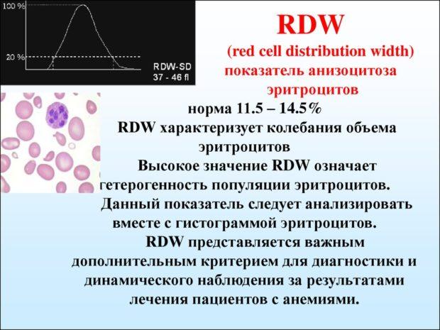 расшифровка RDW в анализе крови