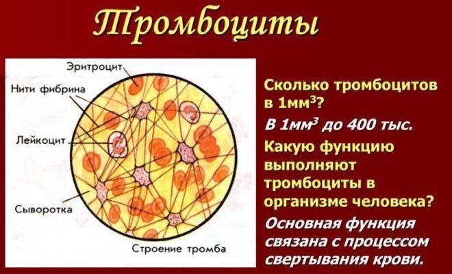 значение тромбоцитов ддля организма
