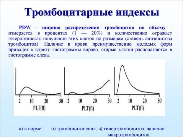 PLT в анализе крови и тромбоцитарные индексы