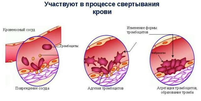 значение тромбоцитов в крови