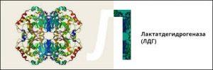 структура молекулы ЛДГ