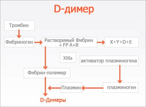 Д-димер и его функции
