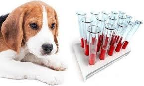 анализы собак на инфекции и их оценка