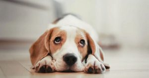 симптомы болезни у собаки