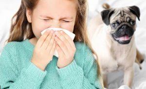 у девочки аллергия на собак