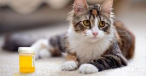 кошка и анализ мочи в емкости