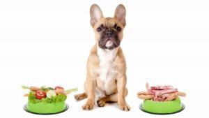 два вида корма у собаки