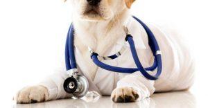 собака на приеме у ветеринара
