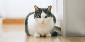 фотография сидящей кошки