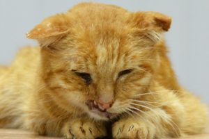 кошка больная ВИК