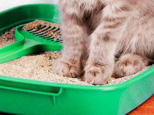 кошка сидит на лотке с песком