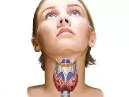 щитовидная железа и ее расположение