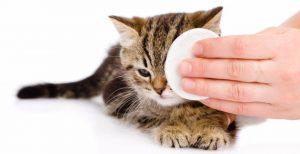 промывание глаз котенку