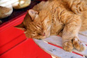 иммунодефицит у кошки