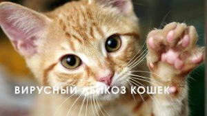 анализ на лейкемию кошек