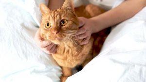 кошку осматривает ветеринар