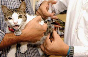 анализ на токсоплазмоз кошке и его проведение