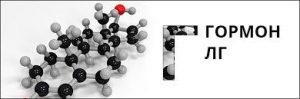 гормон ЛГ и его строение
