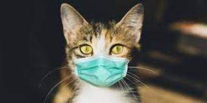 коронавирусная инфекция у кошки