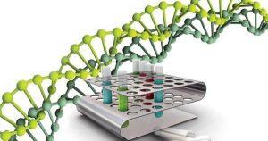 вирус герпеса и его структура