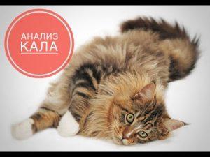анализ кала у кошек и подготовка к нему