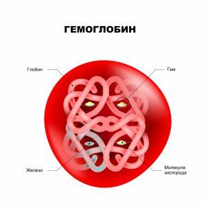 структура молекулы гемоглобина